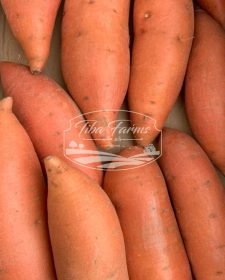 Periogard Sweet Potato